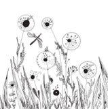 karciana dandelions trawy natura Obrazy Royalty Free