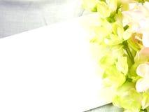 karcianego i sztucznego kwiatu przestrzeń dla odbitkowego tła Zdjęcie Royalty Free