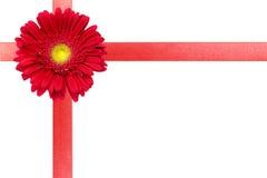 karcianego kwiatu czerwony tasiemkowy biel Fotografia Royalty Free