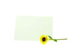 karcianego kwiatu odosobniony biały kolor żółty Obrazy Stock