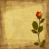 karcianego starego papieru różany rocznik Zdjęcia Stock