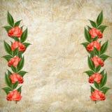 karcianej wakacyjnej czerwieni różany rocznik Zdjęcie Royalty Free