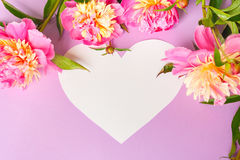 karciany dzień projekta ramy prezenta serca wzoru s bezszwowy kształta valentine wektor Różowe peonie na purpurowym tle Zdjęcia Stock