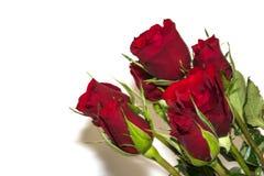karciany ilustracyjny róż stylu wektoru rocznik Zdjęcie Stock