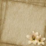 karciany kwiatu wakacje rocznik Zdjęcie Stock