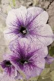 Karciany witn kwiaty Obraz Stock