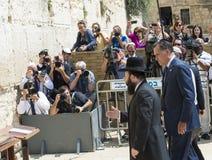 Karda Romney Royaltyfri Foto