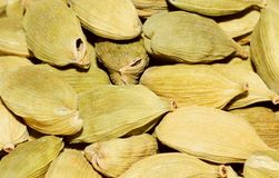 Kardamom (Elettaria cardamomum) Lizenzfreie Stockbilder
