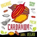 Kardamon ikony zielarskiej etykietki ?wie?y organicznie condiment, dokr?tek ziele pikantno?ci condiment koloru graficznego projek ilustracji