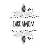 Kardamon pikantność Nakreślenie stylowa wektorowa ilustracja kardamon Rama Karmowy projekta element ilustracji