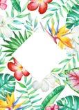 Kardieren Sie Schablone mit tropischen Blumen und Anlagen des Aquarells Lizenzfreies Stockfoto