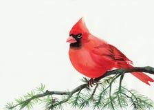 Kardinal royaltyfri illustrationer