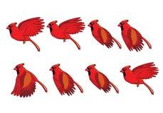Kardinal Bird Flying Sequence Arkivfoton
