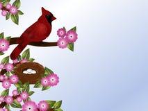 Kardinal och rede Royaltyfria Bilder