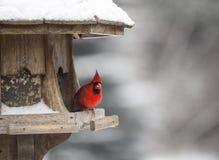 Kardinal på fågelförlagemataren Arkivbilder