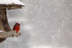 Kardinal på fågelförlagemataren Royaltyfria Foton