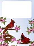 Kardinaler och rede Royaltyfri Bild