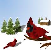 Kardinaler och snö Royaltyfri Fotografi
