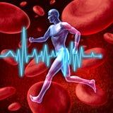 kardiovaskulär cirkulation royaltyfri illustrationer