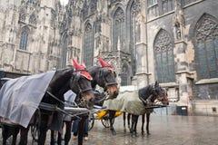 kareciany Austria koń Vienna Fotografia Royalty Free