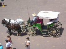 kareciany koń obrazy stock