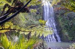 Karekare下跌如把新西兰的当地灌木进行下去 免版税图库摄影