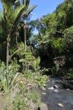 Karekare小河新西兰 图库摄影