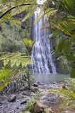 Karekare Falls through native bush of New Zealand Royalty Free Stock Image
