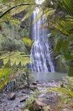 Karekare Falls through native bush of New Zealand Royalty Free Stock Image