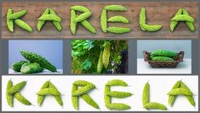 Karela bitter melon caraili composition with text illustration Stock Photography