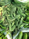 Karela Royalty Free Stock Photo