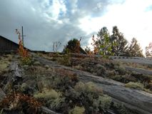 Karelia - мох растя на крыше стоковое фото