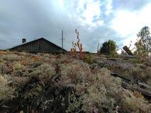 Karelia - мох растя на крыше стоковое фото rf