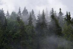 Karelia. Fog in a wood Stock Photos