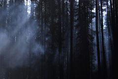 Karelia. Fog in a wood Stock Image