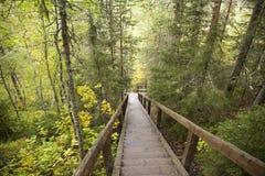 Karelia, la pendiente de la montaña en el bosque en los pasos de madera Fotografía de archivo libre de regalías