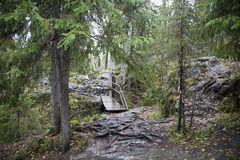 Karelia las, Ruskeala, jesień, mokry drewno, drewniany most Obrazy Stock
