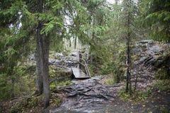 Karelia skog, Ruskeala, höst, vått trä, träbro Arkivbilder