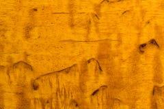 Karelian birch Stock Image