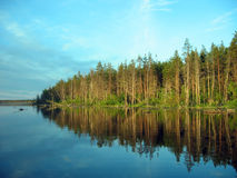 Karelian forest. This is the picture of the quiet Karelian lake and the distant forest under the light of the rising sun royalty free stock images