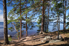 Karelian forest. On Konevets island Royalty Free Stock Image