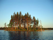 Karelian island. This is the picture of the small island in a quiet Karelian lake stock photography