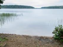 Karelian jezioro w lustrze, trawie, drzewach i San ranek wody, Obraz Stock