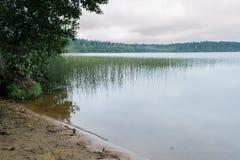 Karelian jezioro w lustrze, trawie, drzewach i San ranek wody, Zdjęcie Royalty Free