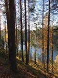 Karelian pines on lake Saimaa. Sunny day on lake Saimaa in Finland Fresh air and silence stock image