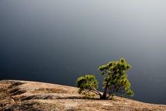 Karelian tree. Tree on the rocks in Karelia, west Russia Royalty Free Stock Image