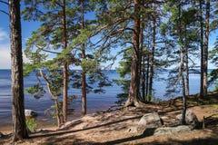 Karelischer Wald Lizenzfreies Stockbild
