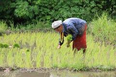 Karen farmers working on rice field Stock Photo
