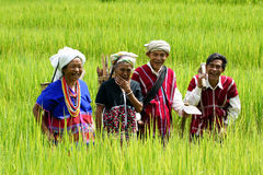 Karen Hill tribe. People in rice field.  are a group of ethnic peoples who reside primarily in southern and southeastern Myanmar (Burma). The Karen make up Stock Photography