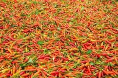 Karen-Paprika in Thailand Stockbild